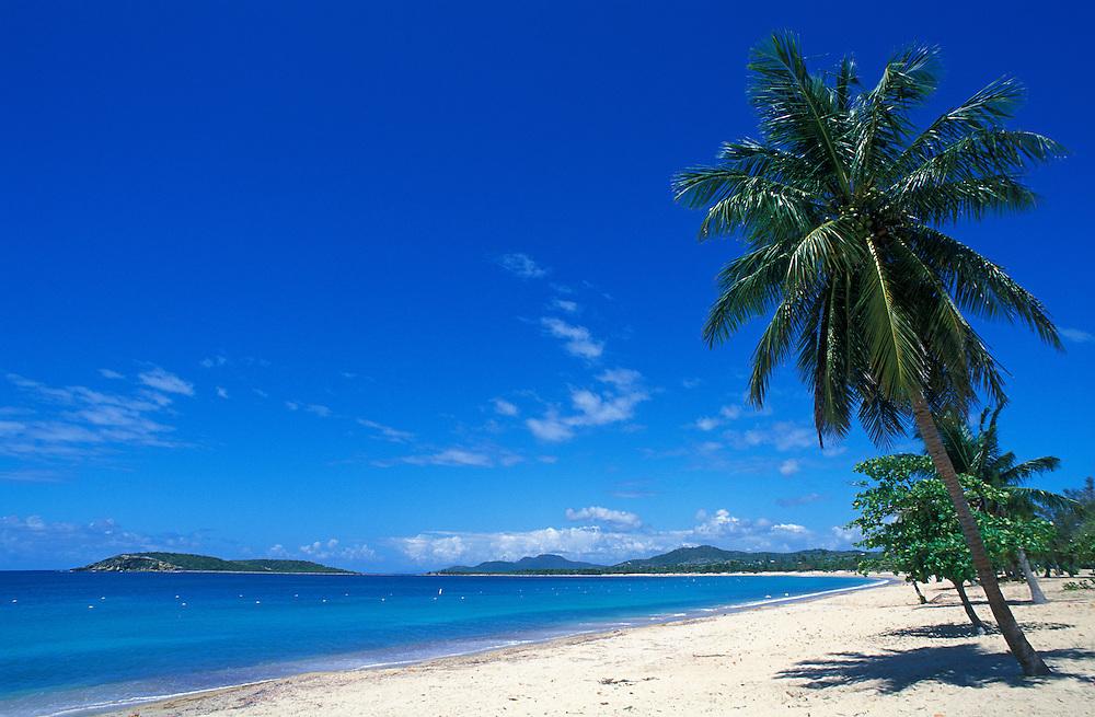 Beach and cocopalm tree at Sun Bay, Vieques Island, Puerto Rico.