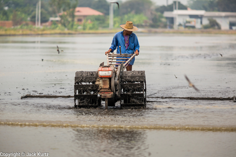17 MARCH 2014 - BUNG THONG LONG, PATHUM THANI, THAILAND: A farmer preps his fields before planting rice. He said he hopes to get a crop out of the field even though he doesn't have enough water. It hasn't rained in central Thailand in more than three months, impacting agriculture and domestic water use. Many farms are running short of irrigration water and salt water from the Gulf of Siam has come up the Chao Phraya River and infiltrated the water plants in Pathum Thani province that serve Bangkok. PHOTO BY JACK KURTZ