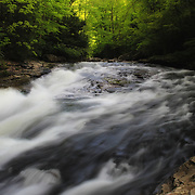 &quot;Forest Stream&quot; <br /> <br /> Scenic Meadow Run in Ohiopyle State Park located in the Laurel Highlands of PA.<br /> <br /> Laurel Highlands by Rachel Cohen