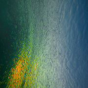 under-water,abstract,wave,ocean,photo,