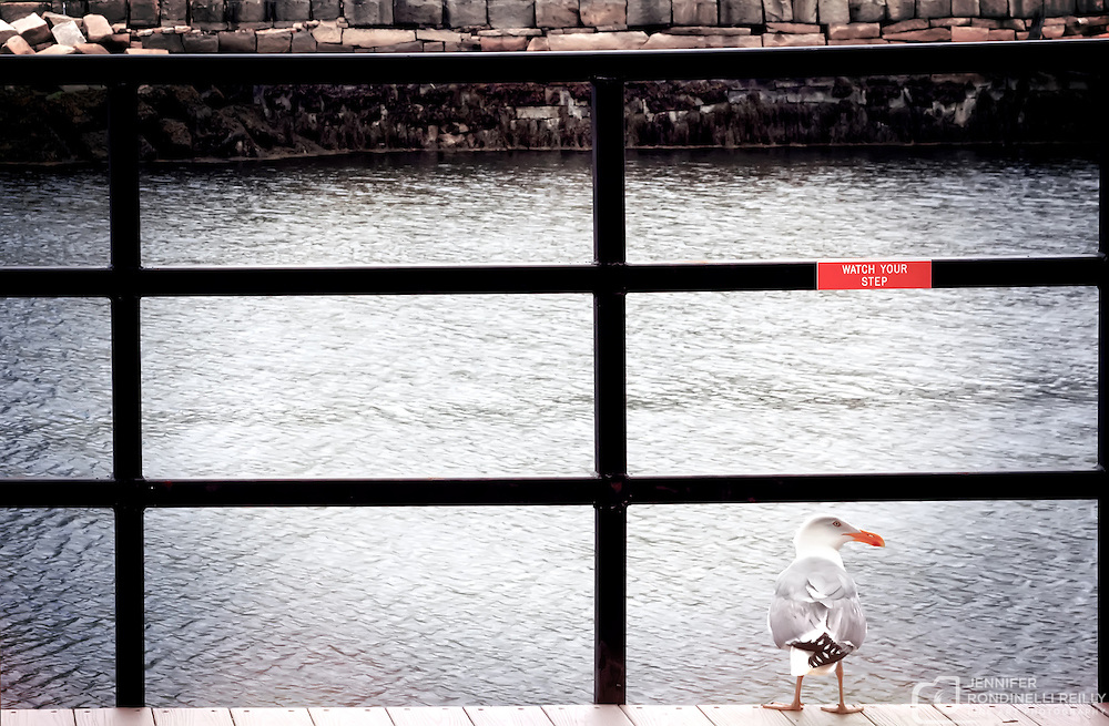 A seagull in downtown Boston. Photo by Jennifer Rondinelli Reilly.
