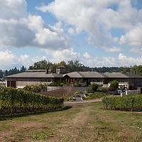 Adelsheim Vineyard with Jillian Bradshaw and winemaker Dave Paige. For 72 Hours in McMinnville for 1859 Magazine. Photo © Tim LaBarge 2013