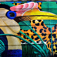 Rhinoceros Hornbill Mural Near Philadelphia Zoo in Philadelphia, Pennsylvania<br /> Bob and Nancy are two rhinoceros hornbills at the Philadelphia Zoo. Both were hatched in 2007. On its head is a structure that takes up to six years to develop and resembles a smaller bill.  It is called the casque and is mostly hollow. The birds are about 30 to 35 inches tall. That is considerably smaller than this colorful wall mural of the rhino hornbill near the entrance to the zoo in Philadelphia.
