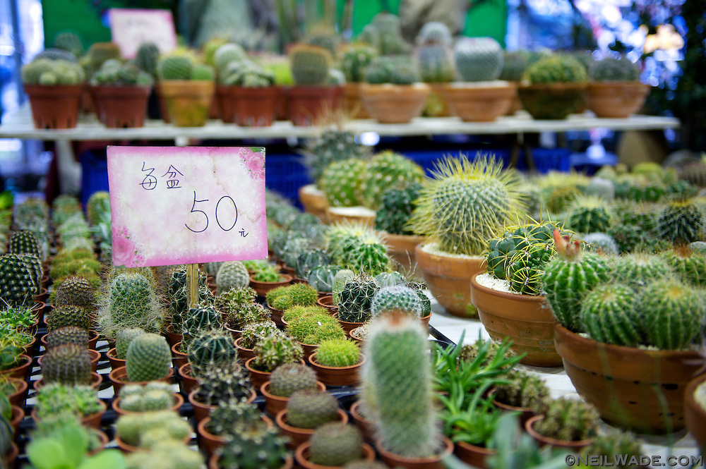 Great deals can be found Jianguo Flower Market (??????) in Taipei, Taiwan on all sorts of flowers including cactuses and orchids.
