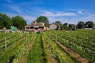 Palmer Vineyard, Riverhead, NY