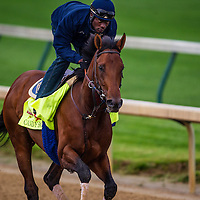 April 30, 2014: Candy Boy gallops in preparation for the Kentucky Derby at Churchill Downs in Louisville Ky. Alex Evers/ESW/CSM