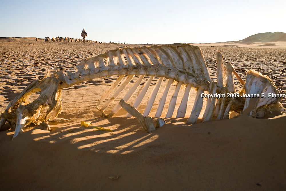 Camel bones in the sand between Dongola, Sudan and the Egyptian border. At the end a number of camels do not make it.