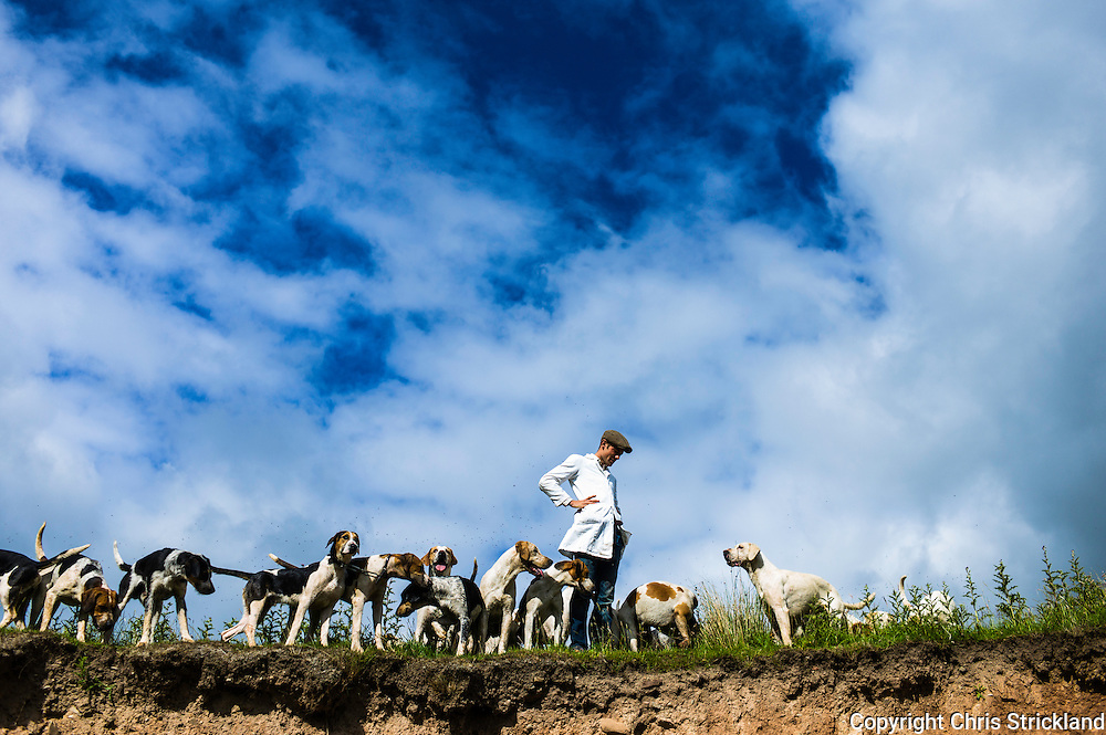 Abbotrule, Bonchester Bridge, Hawick, Scotland, UK. 19th July 2015. Huntsman Johnny Richardson throws a handful of dog biscuits to the hounds of the Jedforest Hunt while on exercise on a sunny summers afternoon in the Scottish Borders.