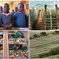 Fair Trade Flower Farms, Kenya