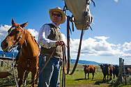 Bryan Ulring, general manager of the J Bar L Ranch, lets the horses graze after herding cattle on June 20, 2012 in the Centennial Valley, near Lakeview, Montana. The J Bar L, a member ranch of Yellowstone  Grassfed Beef, works towards economic and ecological sustainability using holistic management techniques. The J Bar L is also a guest ranch, offering visitors a chance to herd cattle and learn about the holistic approach. <br />