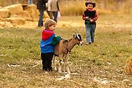 Kids, play, goat, farm