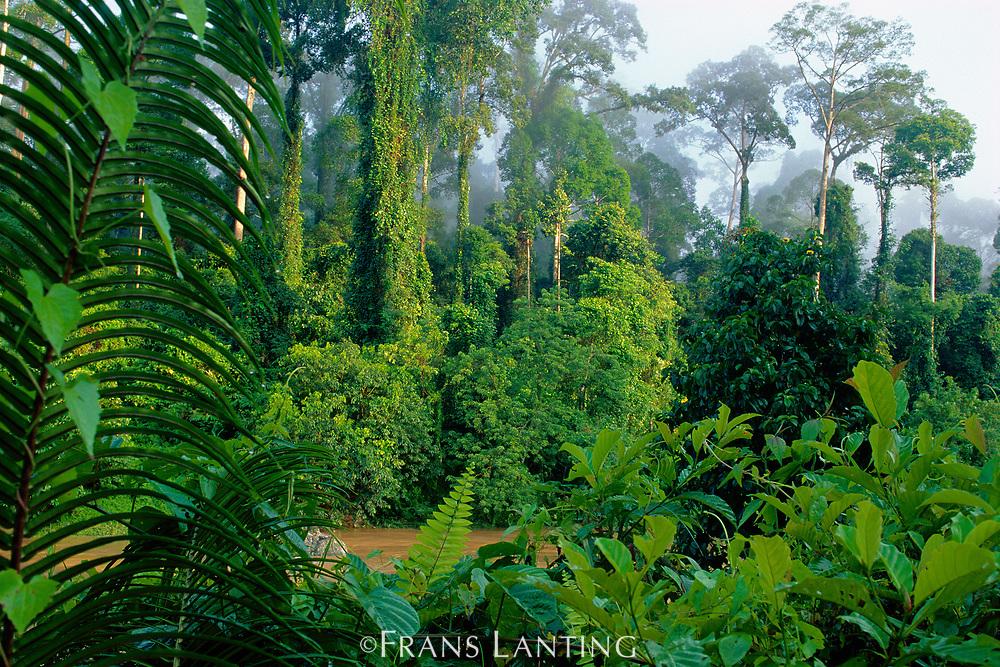 Lowland rainforest, Danum Valley, Sabah, Borneo