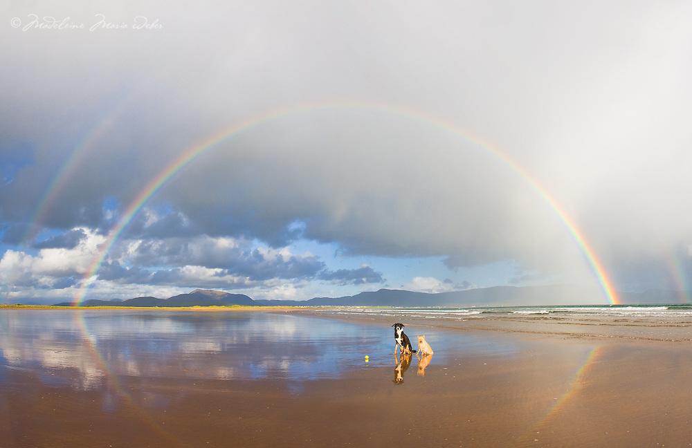 Double Rainbow with dogs on Reenroe Beach, County Kerry, Ireland / cr194