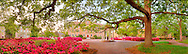 Old Well Azaleas Tree