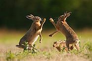 Hare Workshop Selection