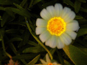 Taken at night with a backlight. This beautiful lone flower glows like diamonds.