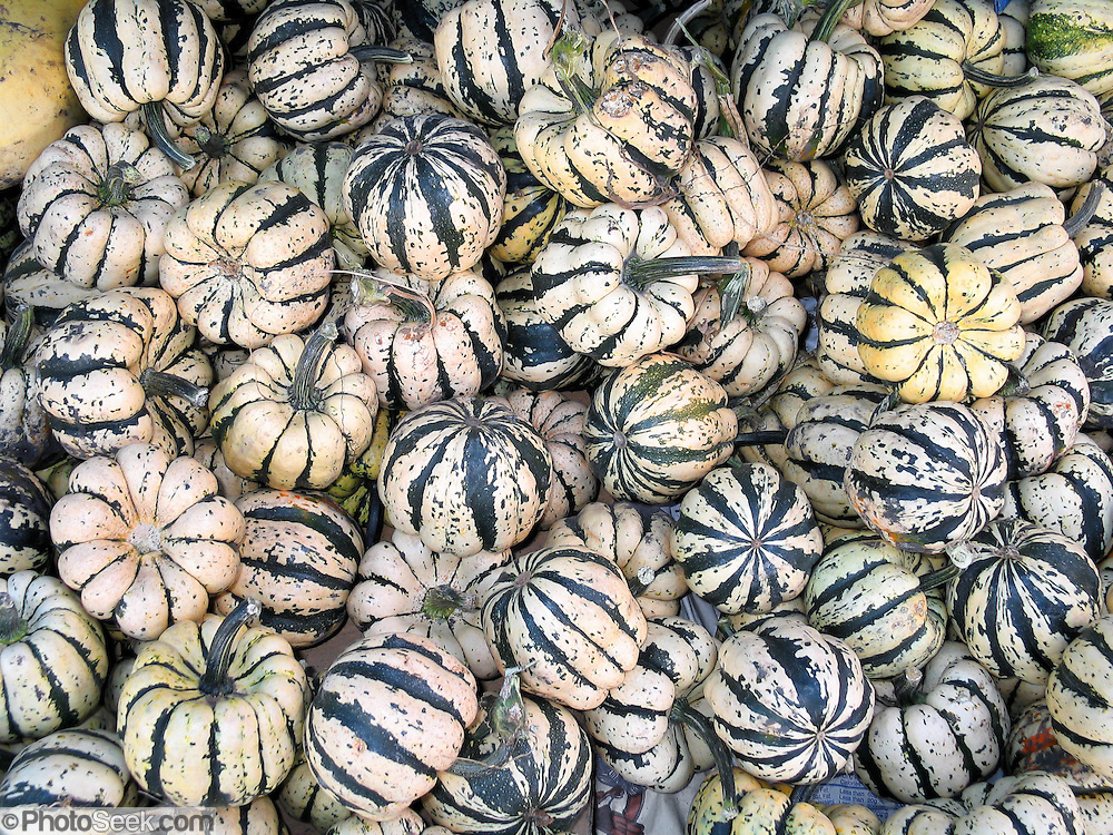 Fall striped squash harvest at a farmer's market, Minnesota, USA.