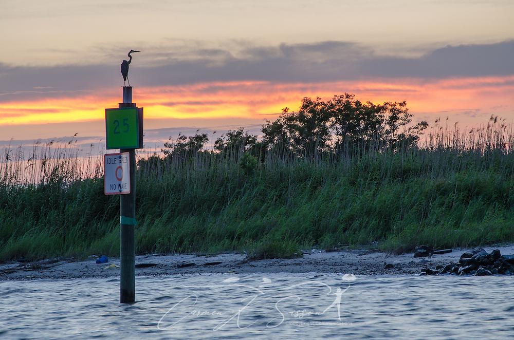 A heron perches as the sun sets near the Bayou La Batre State Docks in Bayou La Batre, Alabama June 17, 2013. (Photo by Carmen K. Sisson/Cloudybright)