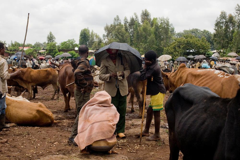 Au bord du Lac Tana, la ville de Bahar Dar est la capitale de la région Amhara et compte 200 000 habitants. C'était autrefois un village de chasseurs, puis un centre d'échanges très important pour les caravaniers. Le marché hebdomadaire de Bahar Dar voit affluer tous les fermiers de la région et regorge de céréales, légumes, bestiaux, tissus, miel etc. Éthiopie août 2011.