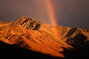 Denali National Park, AK, USA<br /> Alaska Range, Pirate Creek Rainbow.<br /> Fall colors and rainbow through dark clouds.