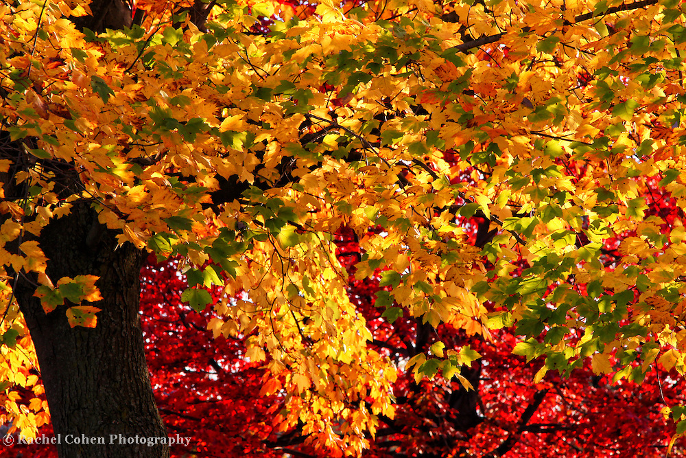 &quot;Abundance&quot;<br />
