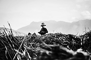 A woman rest momentarily while harvesting rice near Sapa, northern Vietnam.