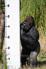 2014-08-21 London Zoo annual weigh-in
