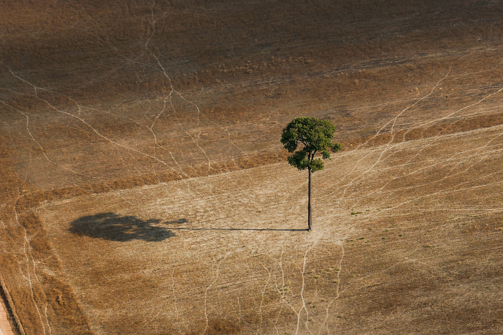 "06/08/05. Flight around Sinop andaround the ""Parque das Castanheiras"" . The Brasilian Nut Tree ""Castanheira"" is protected in Brasil, but plenty had been logged (some where left alone standing on the soy fields)...(c)Daniel Beltra/Greenpeace"