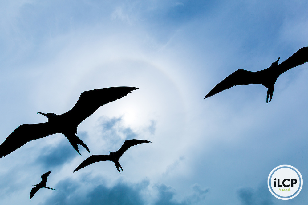 Magnificant Frigate Birds hover over fishermen cleaning fish in Punta Herrero, a small, remote fishing camp in the Sian Ka'an Biosphere Reserve in southernmost Caribbean Mexico. From a 2014 iLCP (International League of Conservation Photographers) expedition project documenting the people and places of the Mexican section of the Mesoamerican Reef (MAR).