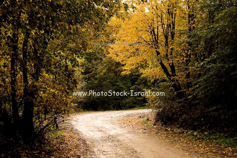 Romania, Transylvania, rural landscape