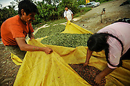 The Calicho family separate the seeds from dried coca leaves in Villa Tunari in the Chapare region of Bolivia. It's estimated that 90 percent of coca from the Chapare goes to the drug trade.