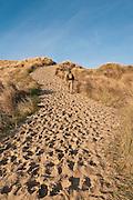 Man hiking on sand dunes beach trail at South Jetty Beach, Oregon Dunes National Recreation Area, Oregon coast.