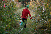 Russell Laman haling a bushel of apples after a day of apple picking.