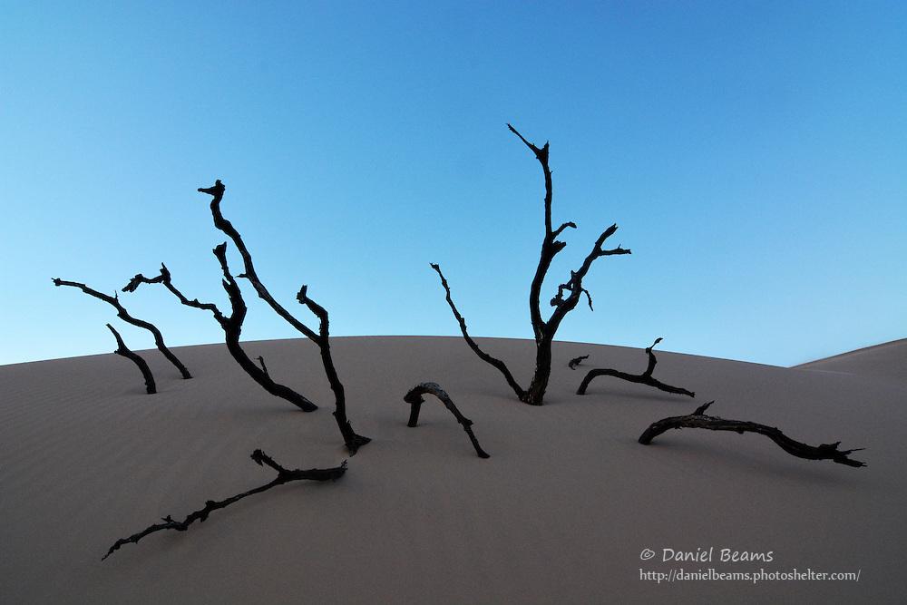 Sand dunes on the Parapeti River, Isosog, Santa Cruz, Bolivia