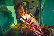 Worker at the Caribbean Seafood processing plant in Keys, Honduras weighs  freshly caught vermillion Snappers. Keys is a small island in Honduras that is inhabited mainly by fishermen from English settlers who came centuries ago.
