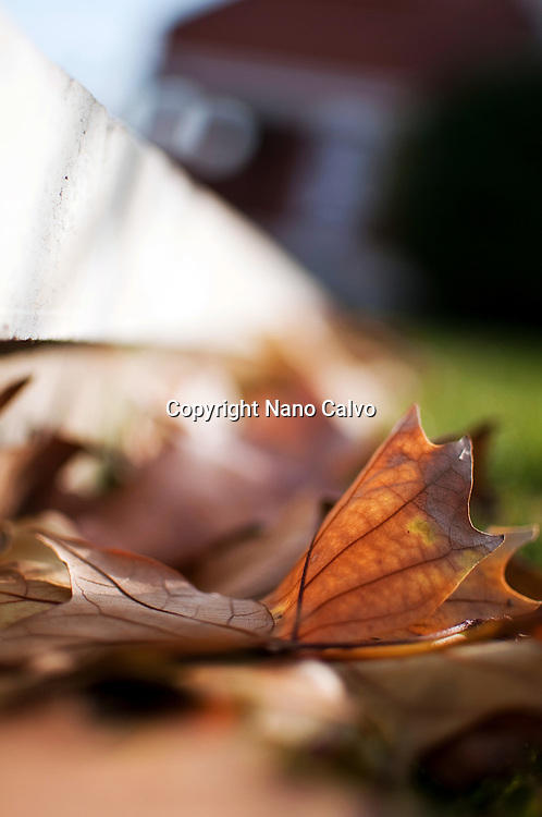 Dry fallen leaves in Autumn
