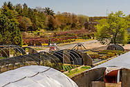 Environmental Nursery, Cutchogue, NY