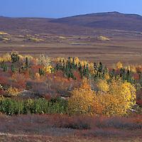 Tundra in Fall Foliage.along Dalton Highway.Brooks Range.Alaska.USA
