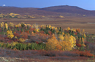 Tundra in Fall Foliage.along Dalton Highway.Brooks Range.Alaska.USA