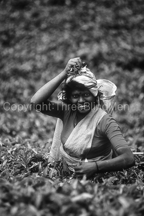 Tamil tea plucker on an estate near Nuwara Eliya.