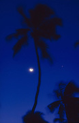 Coconut Tree and Moon. photographed from Mr Hamid's garden at Bentota.