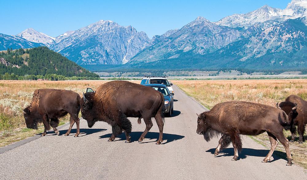 On Antelope Road, Jackson Hole, Wyoming.