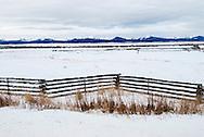 Rancher, feeding cattle, Big Hole Valley, Beaverhead Mountains, Montana