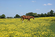 Askett, Buckinghamshire, summer