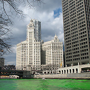 Each year the Chicago River is dyed green in celebration of St. Patrick's  In the background is the Wrigley Building and the Michigan Avenue bridge
