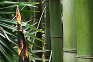 Bambouseraie juin
