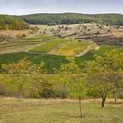 Liliac Winery, Transylvania, Romania.