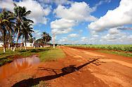 Sugar cane field in Baragua, Ciego de Avila Province, Cuba.