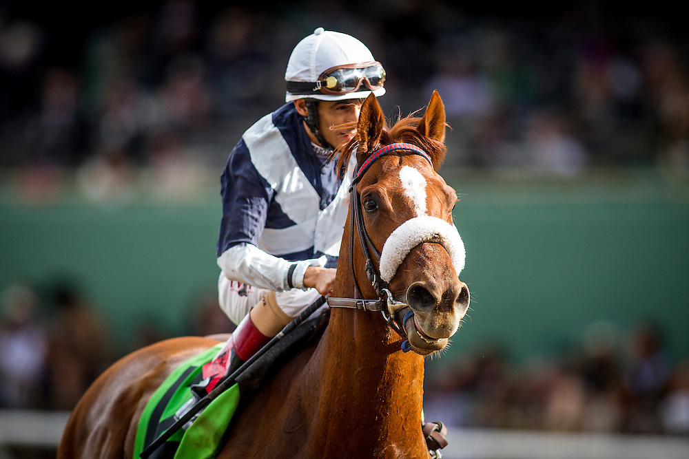 November 01 2014: Main Sequence , ridden by John Velazquez and trained by Graham Motion, wins the Breeders' Cup Turf (G1) at Santa Anita Park in Arcadia, California on November 1, 2014.  Alex Evers/ESW/CSM
