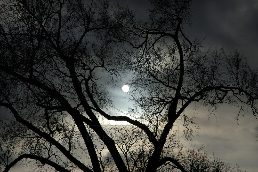 ... the persistent clouds and the heart-shaped branches of a winter tree